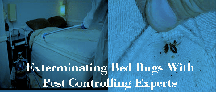 Exterminating Bed Bugs With Pest Controlling Experts